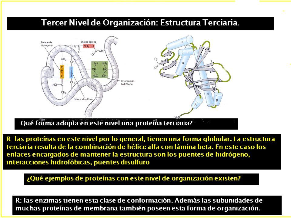 Tercer Nivel de Organización: Estructura Terciaria.
