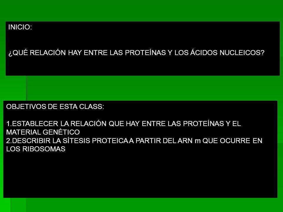 INICIO: ¿QUÉ RELACIÓN HAY ENTRE LAS PROTEÍNAS Y LOS ÁCIDOS NUCLEICOS.