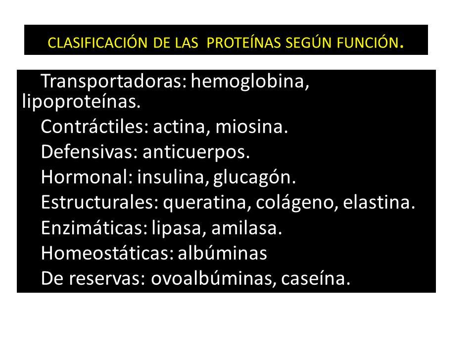 CLASIFICACIÓN DE LAS PROTEÍNAS SEGÚN FUNCIÓN.Transportadoras: hemoglobina, lipoproteínas.