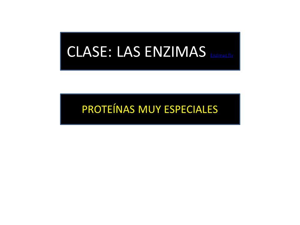 CLASE: LAS ENZIMAS Enzimas.flv Enzimas.flv PROTEÍNAS MUY ESPECIALES