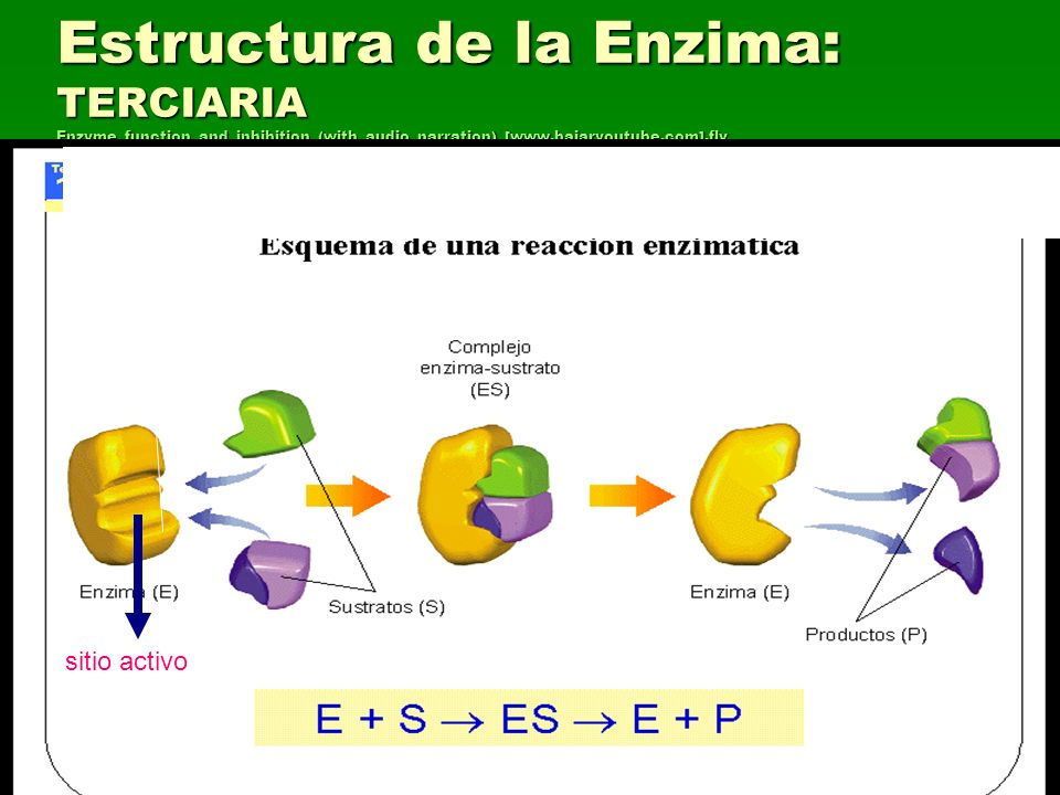 Estructura de la Enzima: TERCIARIA Enzyme_function_and_inhibition_(with_audio_narration)_[www.bajaryoutube.com].flv Enzyme_function_and_inhibition_(wi
