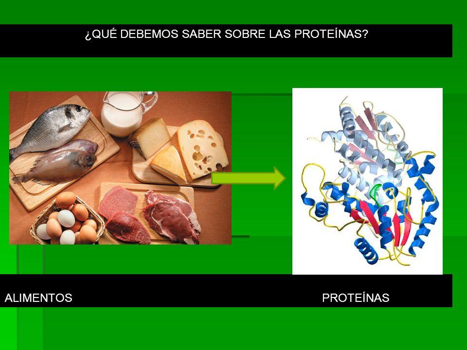 PROTEÍNAS (PROTEIOS= PRIMARIO) Son biomoléculas esenciales para la vida, participan en todas las funciones que ocurren en el cuerpo.