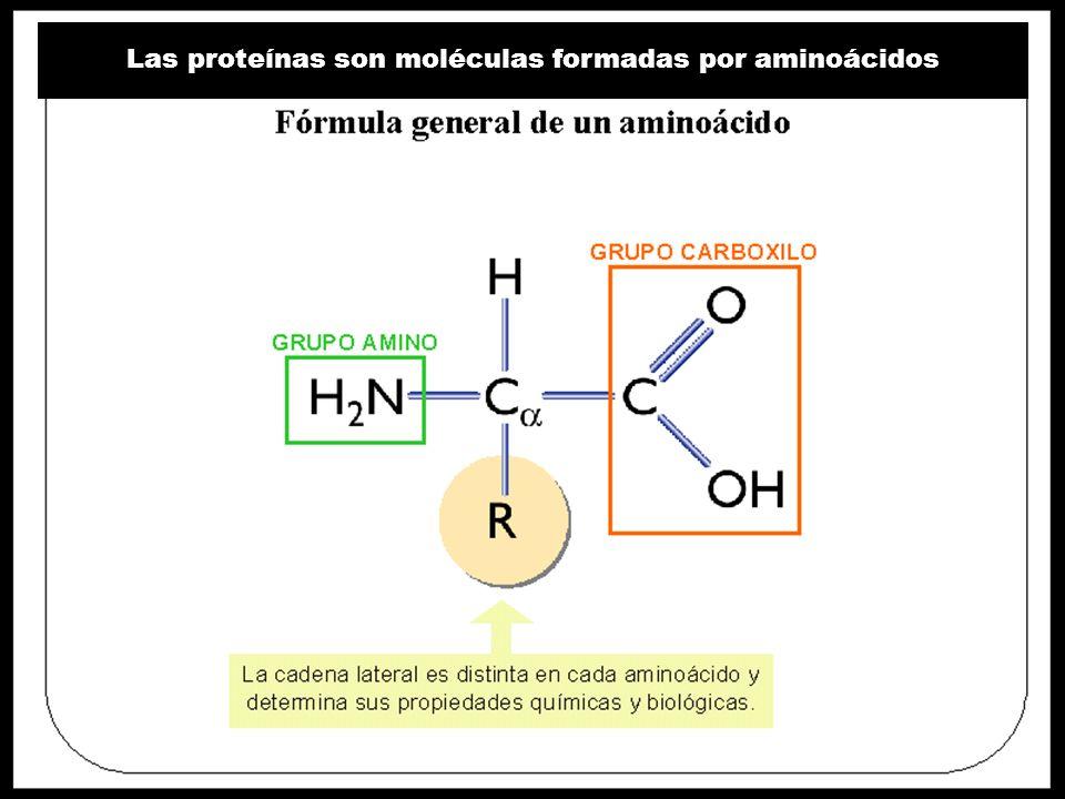 Cuarto Nivel de Organización: Estructura Cuaternaria ¿Cuál es la base de la organización de esta proteína.