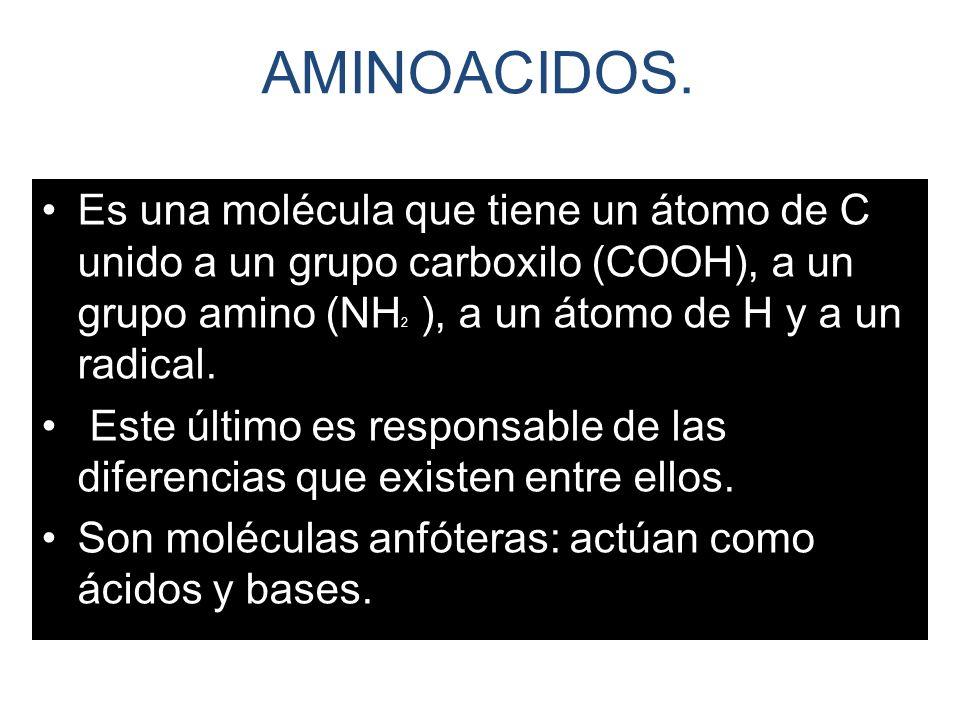 AMINOACIDOS.