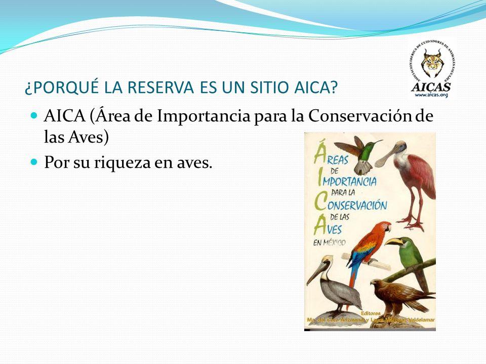 ¿PORQUÉ LA RESERVA ES UN SITIO AICA? AICA (Área de Importancia para la Conservación de las Aves) Por su riqueza en aves.