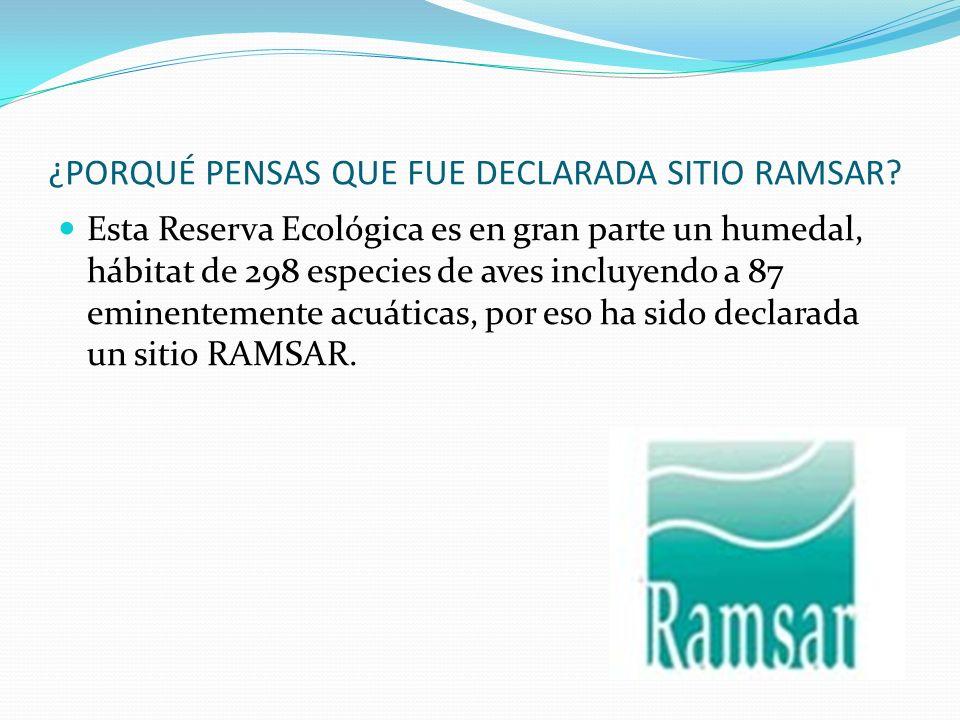 ¿PORQUÉ PENSAS QUE FUE DECLARADA SITIO RAMSAR? Esta Reserva Ecológica es en gran parte un humedal, hábitat de 298 especies de aves incluyendo a 87 emi