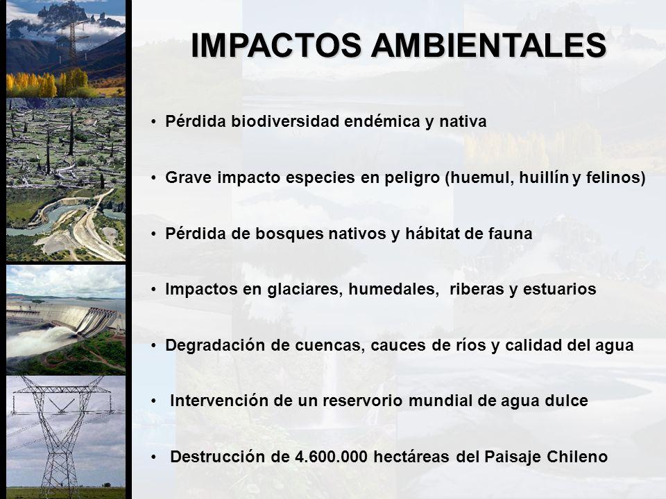IMPACTOS AMBIENTALES Pérdida biodiversidad endémica y nativa Grave impacto especies en peligro (huemul, huillín y felinos) Pérdida de bosques nativos