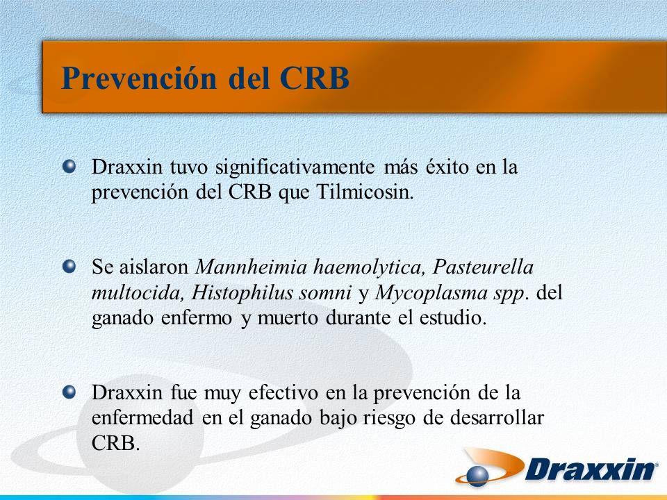 Prevención del CRB Draxxin tuvo significativamente más éxito en la prevención del CRB que Tilmicosin. Se aislaron Mannheimia haemolytica, Pasteurella