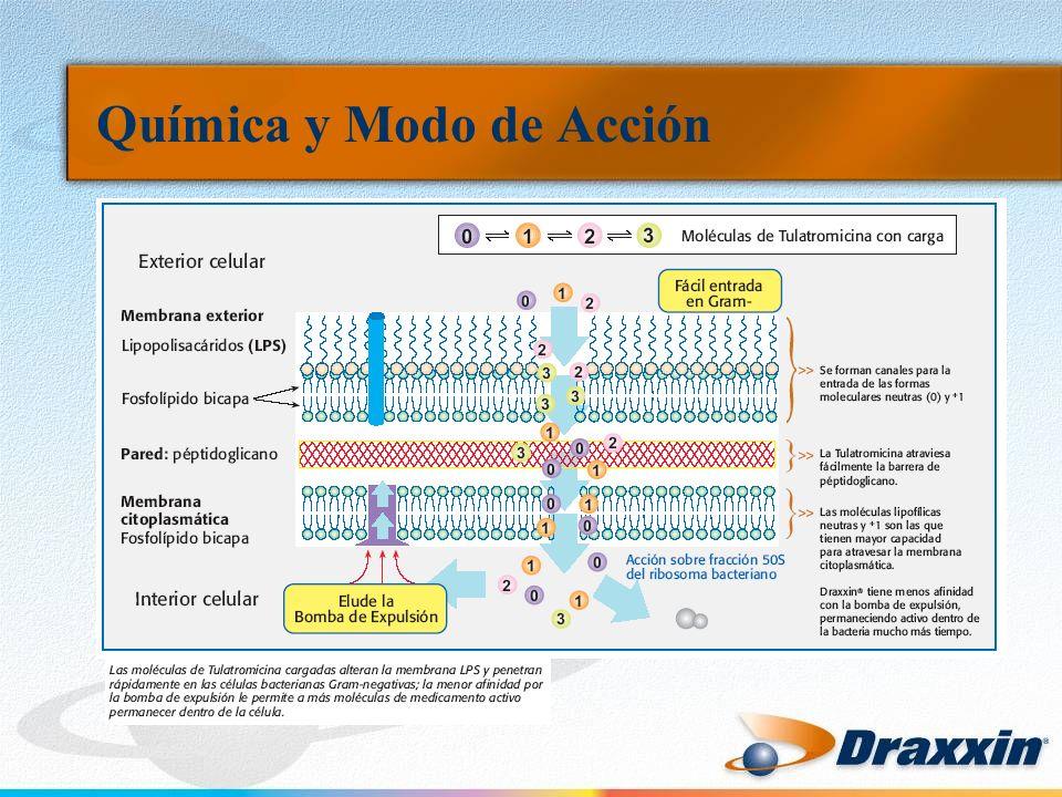 Farmacodinámica La acción antibacteriana de Draxxin está determinada por el tiempo que los patógenos son expuestos a una cantidad apropiada de medicamento.