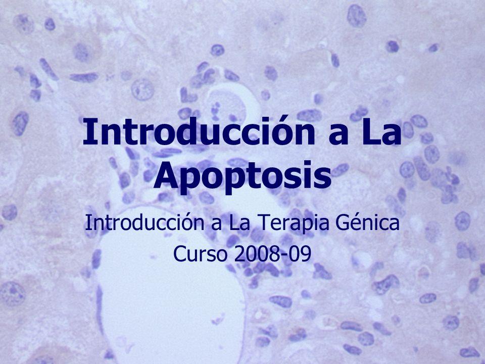 Introducción a La Apoptosis Introducción a La Terapia Génica Curso 2008-09