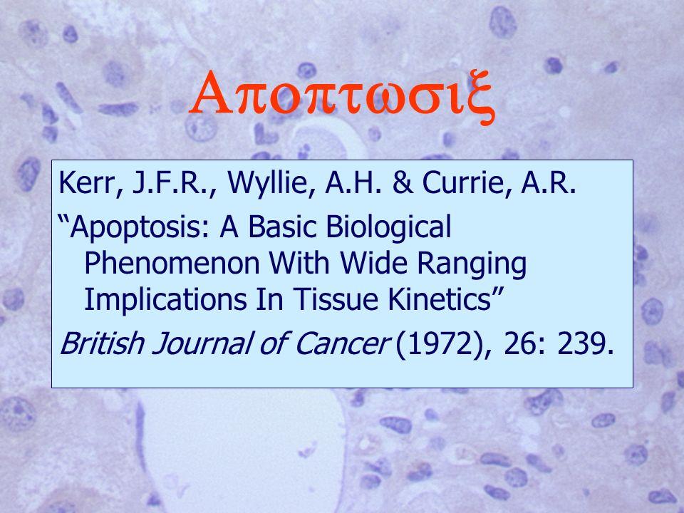 Kerr, J.F.R., Wyllie, A.H.& Currie, A.R.