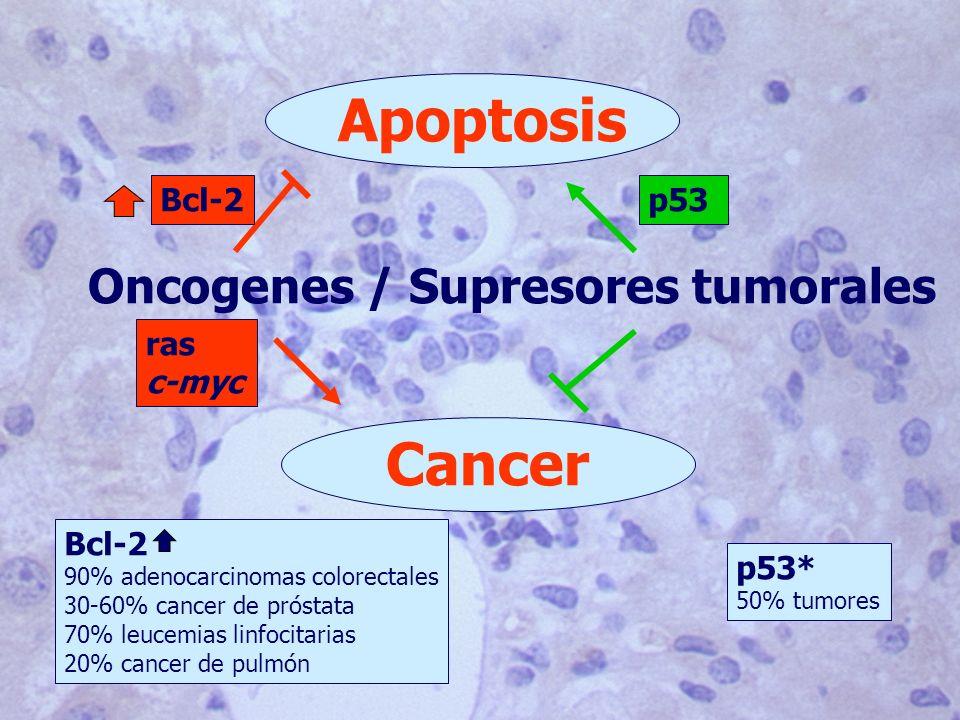 Oncogenes / Supresores tumorales Apoptosis Cancer ras c-myc p53Bcl-2 p53* 50% tumores Bcl-2 90% adenocarcinomas colorectales 30-60% cancer de próstata 70% leucemias linfocitarias 20% cancer de pulmón
