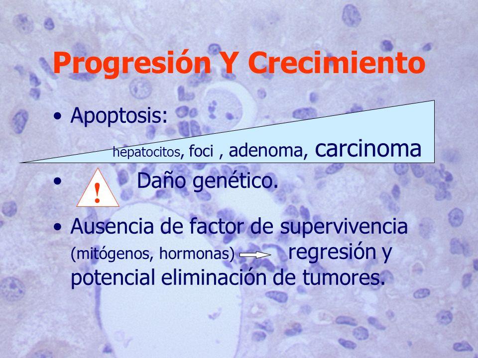 Progresión Y Crecimiento Apoptosis: hepatocitos, foci, adenoma, carcinoma Daño genético. Ausencia de factor de supervivencia (mitógenos, hormonas) reg