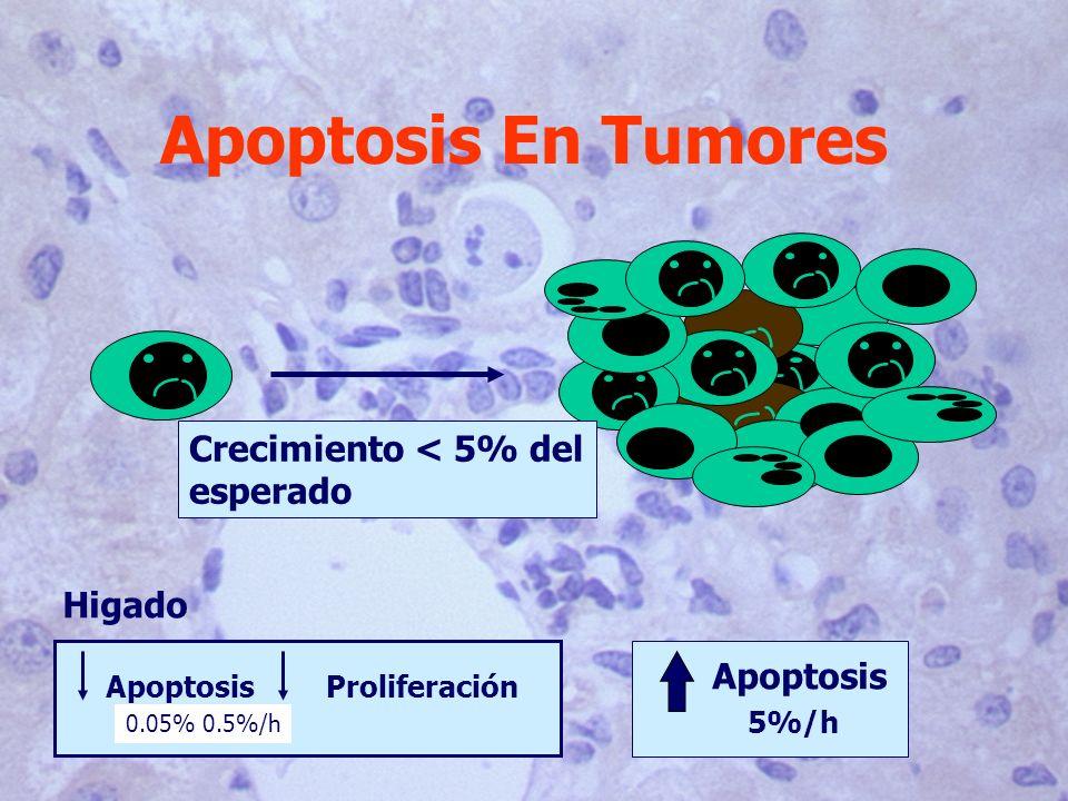 Apoptosis En Tumores ApoptosisProliferación 0.05% 0.5%/h 5%/h Apoptosis Crecimiento < 5% del esperado Higado