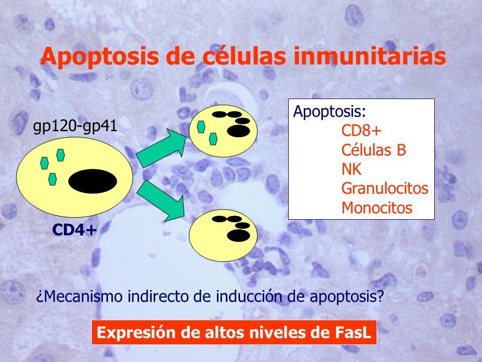 Apoptosis de células inmunitarias gp120-gp41 CD4+ Apoptosis: CD8+ Células B NK Granulocitos Monocitos ¿Mecanismo indirecto de inducción de apoptosis?