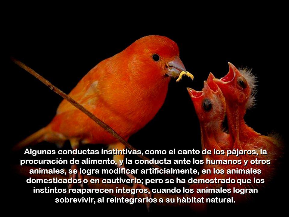 También es sabido que hay aves que no construirán su nido, ni empollarán sus huevos, si las circunstancias no son propicias; y que muchos animales se