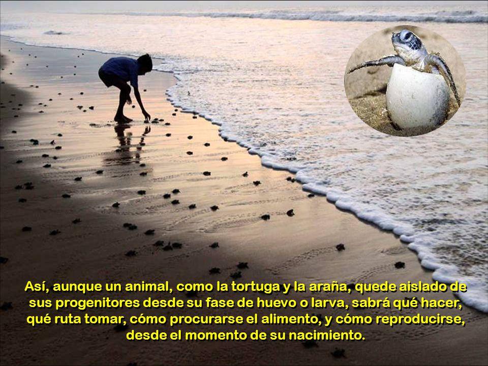 Los instintos tienen como fin preservar la integridad del individuo y de su especie, y son conductas no aprendidas, ni modificables, comunes a todos l