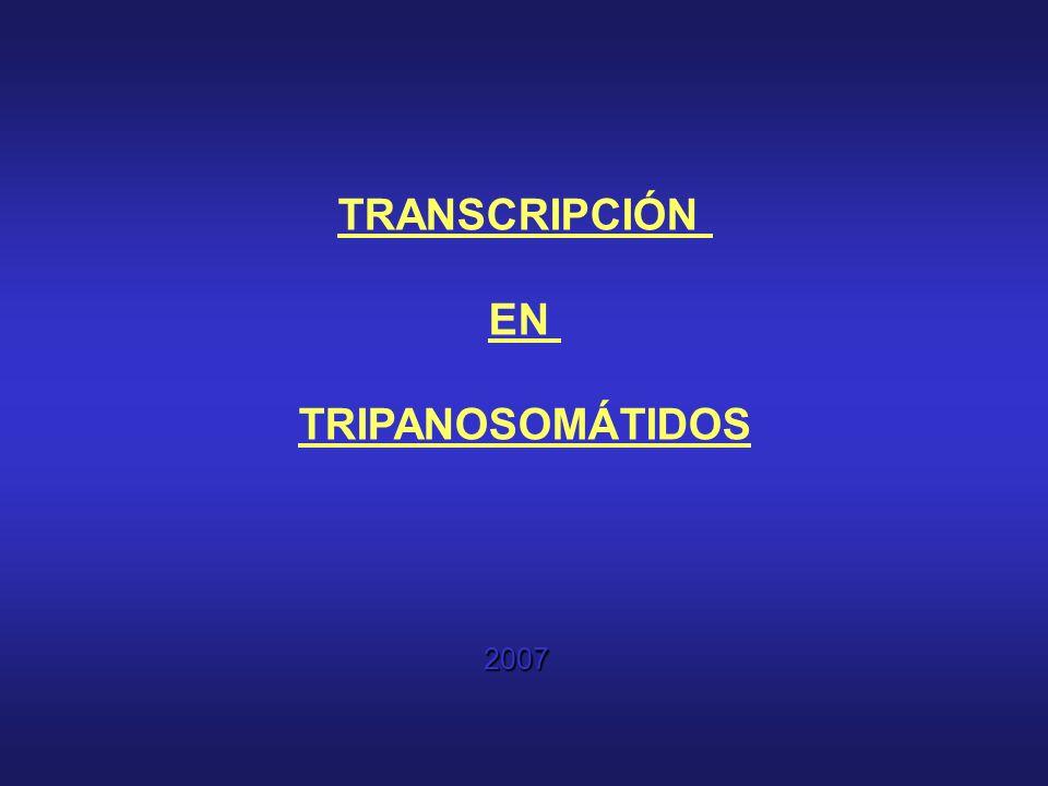 TRANSCRIPCIÓN EN TRIPANOSOMÁTIDOS 2007
