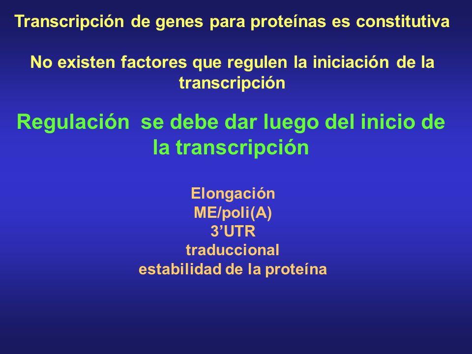 Transcripción de genes para proteínas es constitutiva No existen factores que regulen la iniciación de la transcripción Regulación se debe dar luego del inicio de la transcripción Elongación ME/poli(A) 3UTR traduccional estabilidad de la proteína