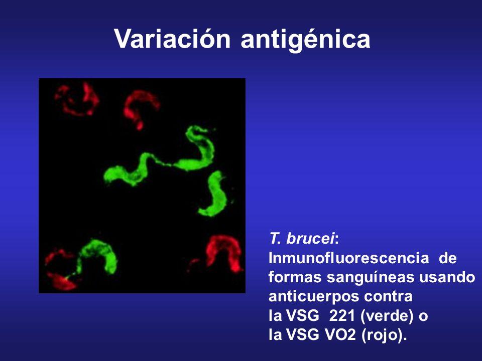 Variación antigénica T.
