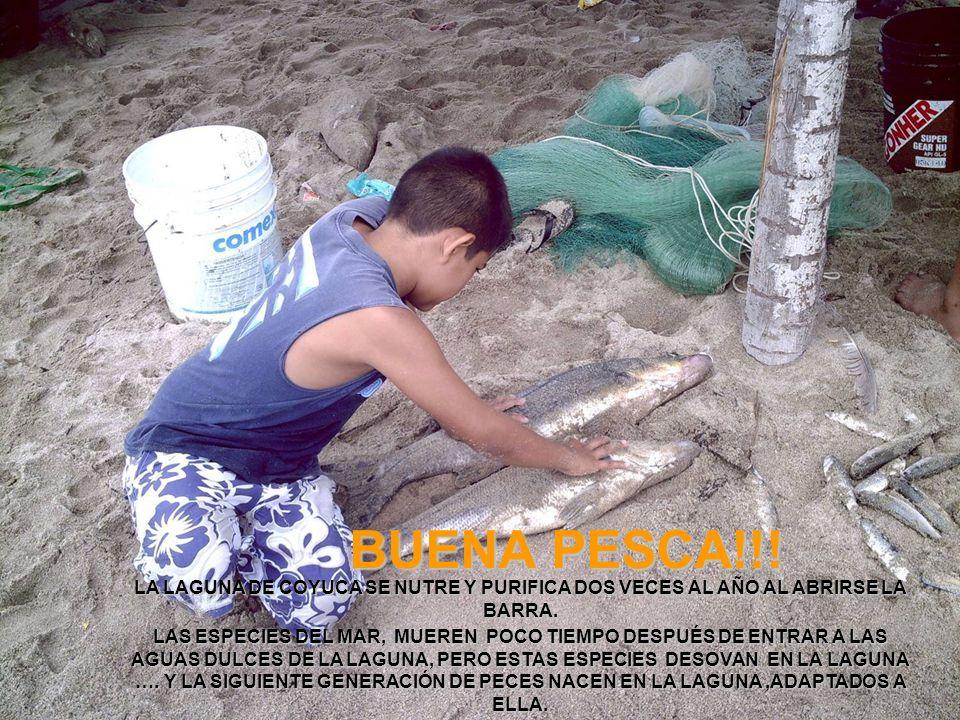 BUENA PESCA!!! LA LAGUNA DE COYUCA SE NUTRE Y PURIFICA DOS VECES AL AÑO AL ABRIRSE LA BARRA. LAS ESPECIES DEL MAR, MUEREN POCO TIEMPO DESPUÉS DE ENTRA