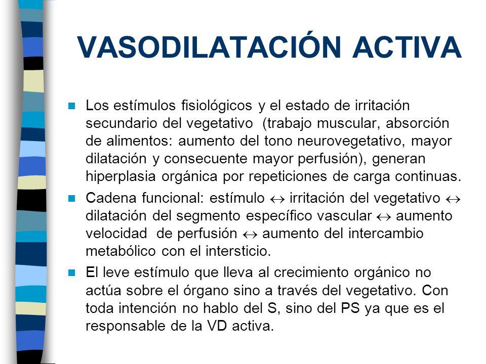 VASODILATACIÓN ACTIVA Los estímulos fisiológicos y el estado de irritación secundario del vegetativo (trabajo muscular, absorción de alimentos: aument