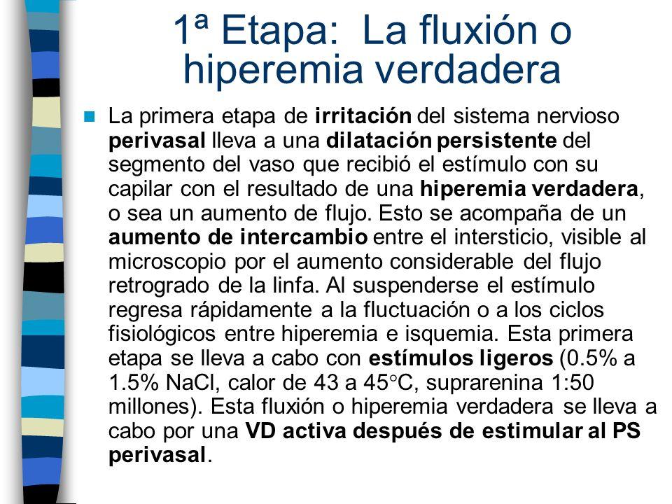 1ª Etapa: La fluxión o hiperemia verdadera La primera etapa de irritación del sistema nervioso perivasal lleva a una dilatación persistente del segmen