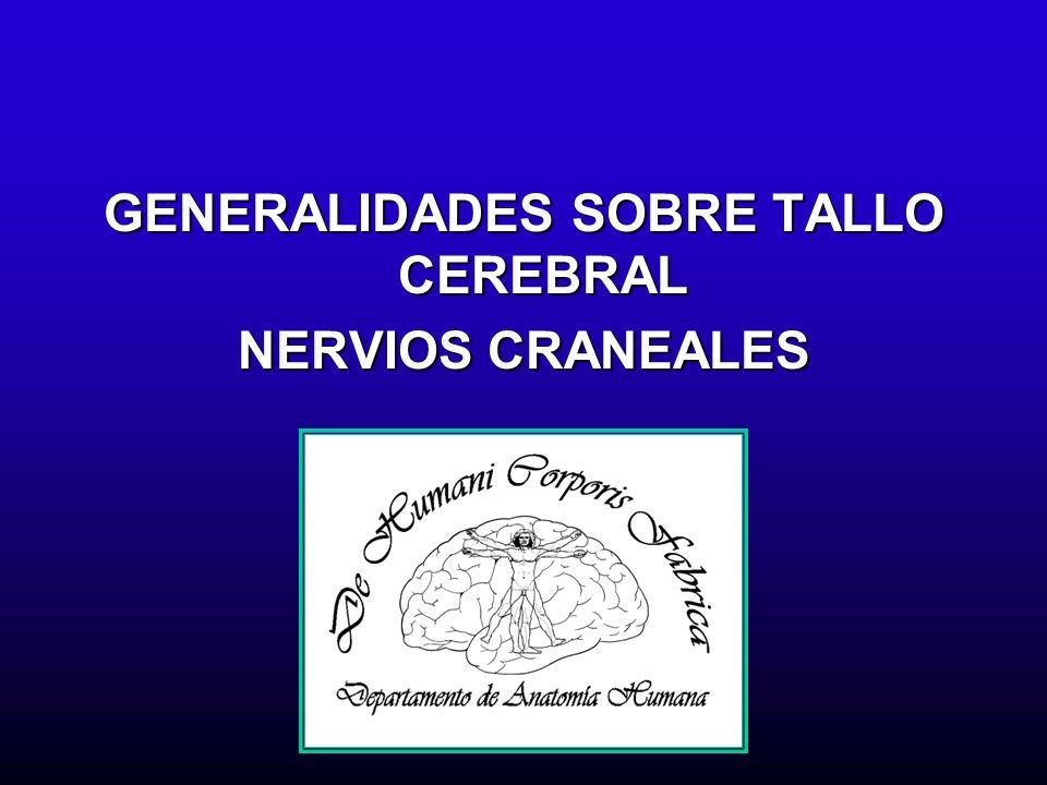 Generalidades sobre tallo cerebral Parte del sistema nervioso central que se encuentra limitada hacia arriba por el diencéfalo y hacia abajo por la médula espinal e incluye al mesencéfalo o cerebro medio y al rombencéfalo o cerebro posterior.