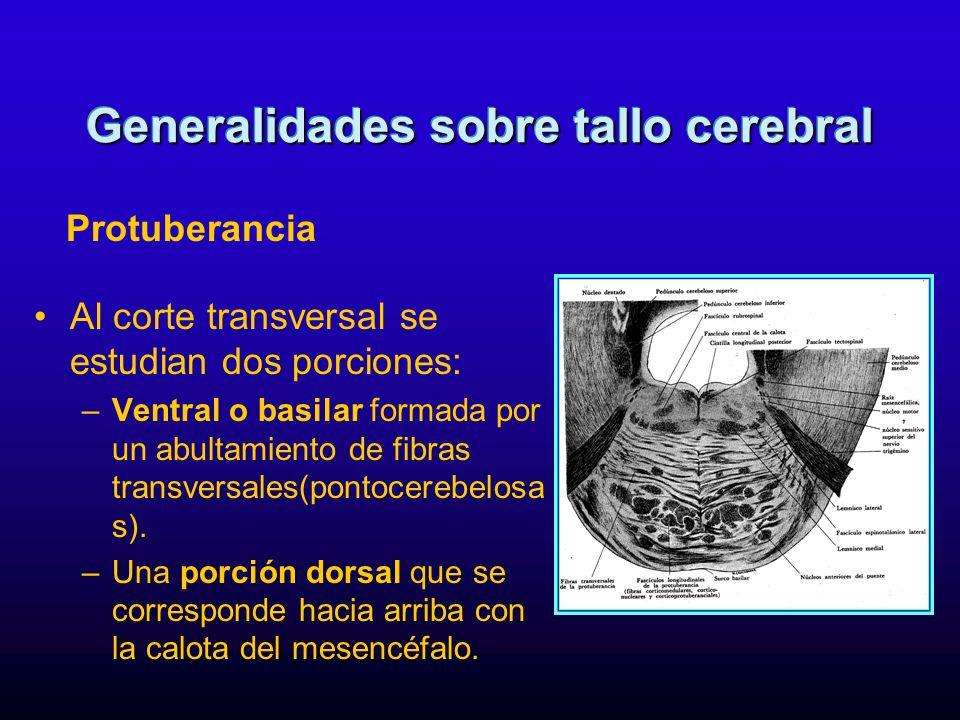 Al corte transversal se estudian dos porciones: –Ventral o basilar formada por un abultamiento de fibras transversales(pontocerebelosa s). –Una porció