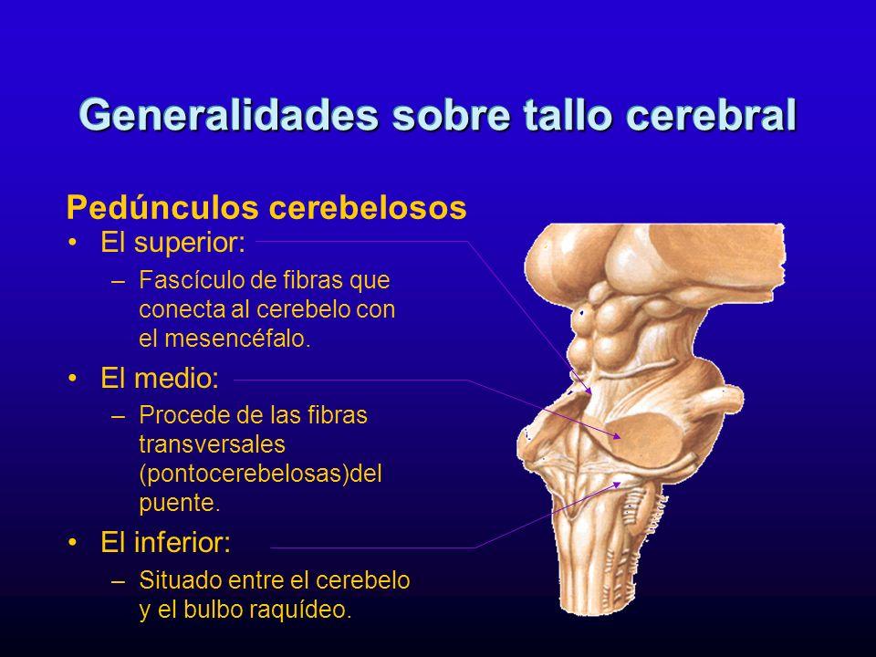 El superior: –Fascículo de fibras que conecta al cerebelo con el mesencéfalo. El medio: –Procede de las fibras transversales (pontocerebelosas)del pue