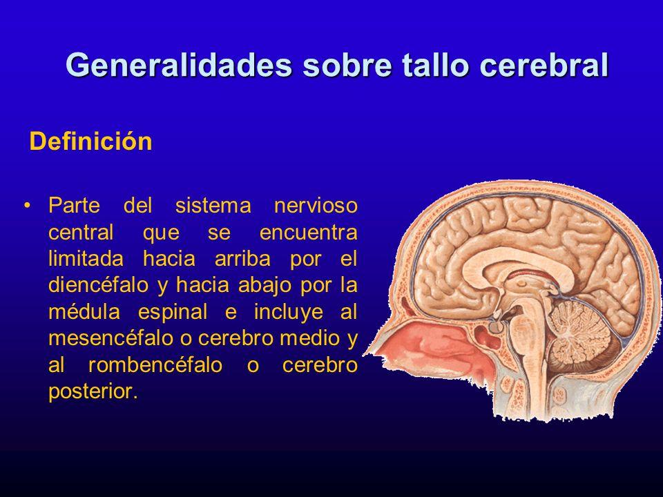 El tallo cerebral está formado de arriba hacia abajo por: Generalidades sobre tallo cerebral Por delante: Mesencéfalo Puente Bulbo Por atrás el cerebelo