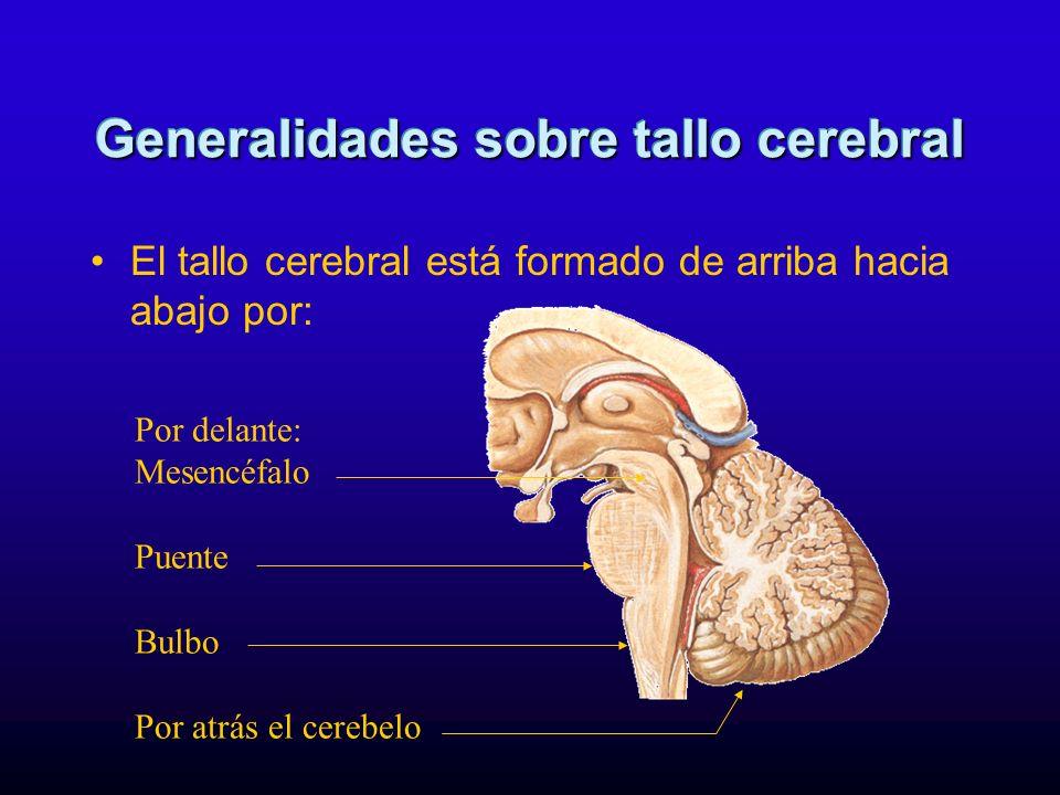 El tallo cerebral está formado de arriba hacia abajo por: Generalidades sobre tallo cerebral Por delante: Mesencéfalo Puente Bulbo Por atrás el cerebe