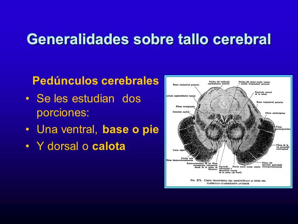 Es la cavidad del mesencéfalo, comunica tercero y cuarto ventrículos por donde circula líquido cefalorraquídeo Generalidades sobre tallo cerebral Acueducto de Silvio