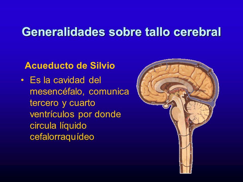 Es la cavidad del mesencéfalo, comunica tercero y cuarto ventrículos por donde circula líquido cefalorraquídeo Generalidades sobre tallo cerebral Acue