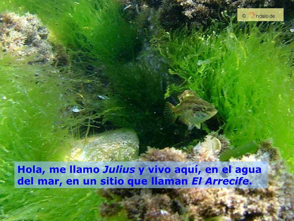 Hola, me llamo Julius y vivo aquí, en el agua del mar, en un sitio que llaman El Arrecife. © I ndalo de O z