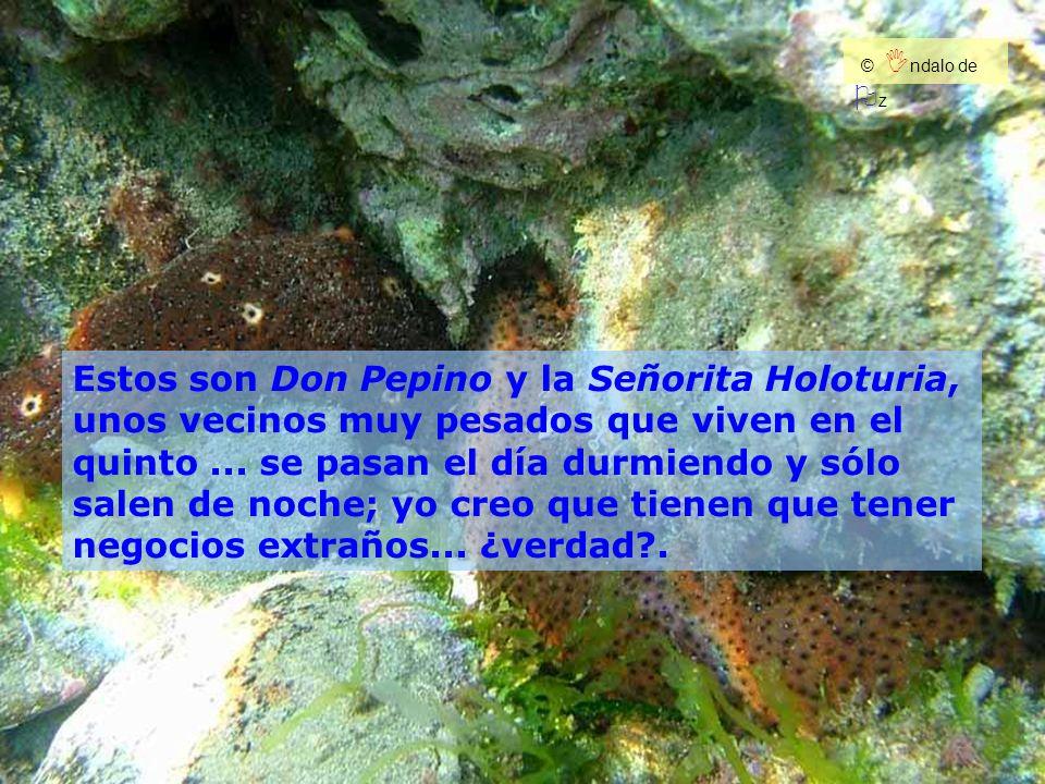 Estos son Don Pepino y la Señorita Holoturia, unos vecinos muy pesados que viven en el quinto... se pasan el día durmiendo y sólo salen de noche; yo c
