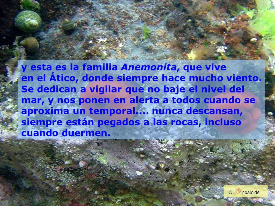 y esta es la familia Anemonita, que vive en el Ático, donde siempre hace mucho viento. Se dedican a vigilar que no baje el nivel del mar, y nos ponen