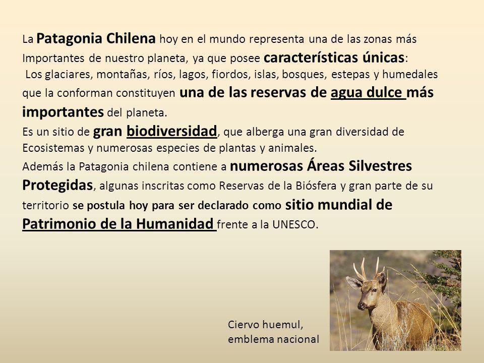 La Patagonia Chilena hoy en el mundo representa una de las zonas más Importantes de nuestro planeta, ya que posee características únicas : Los glaciar