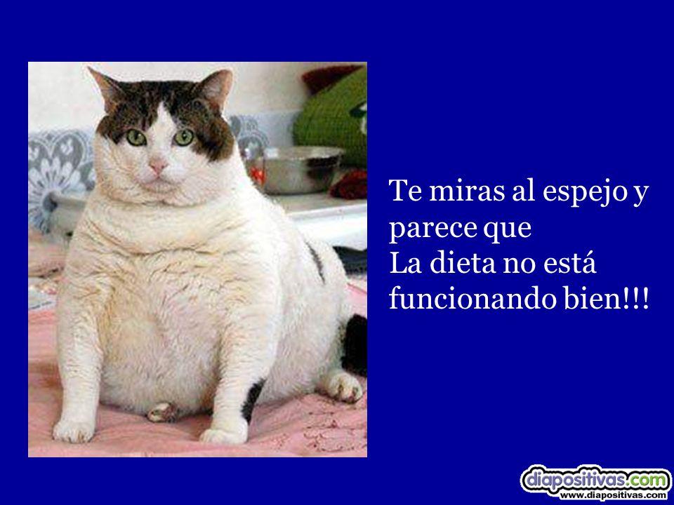 Te miras al espejo y parece que La dieta no está funcionando bien!!!