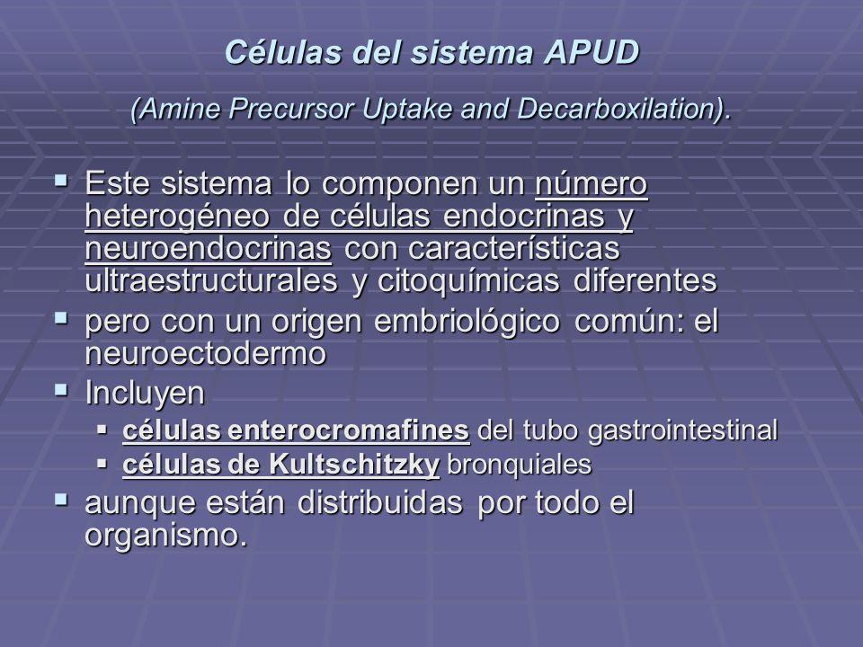 El Sistema APUD es un sistema hormonal paralelo al sistema endocrino común es un sistema hormonal paralelo al sistema endocrino común que se caracteriza por conformarse a partir de epitelios que se caracteriza por conformarse a partir de epitelios ya que la producción hormonal de este no es por parte de glándulas ya que la producción hormonal de este no es por parte de glándulas si no de células epiteliales en su conjunto, como las que existen en el intestino, corazón, estomago etc.