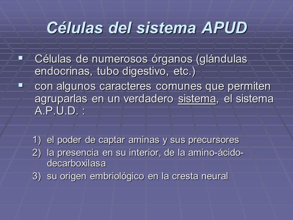 Células del sistema APUD Cada epitelio, como sistema APUD se diferencia en la hormona que secreta.