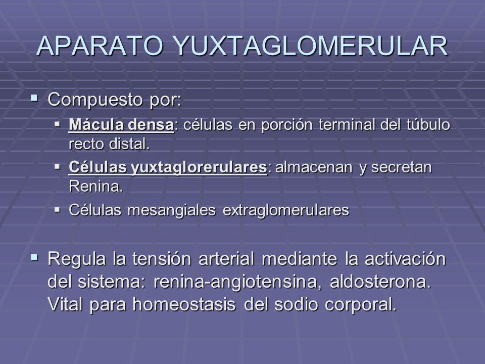 FACTOR NATRIURETICO ATRIAL O factor natriurético auricular O factor natriurético auricular Es una hormona polipeptídica segregada por las células musculares de la aurícula cardiaca.