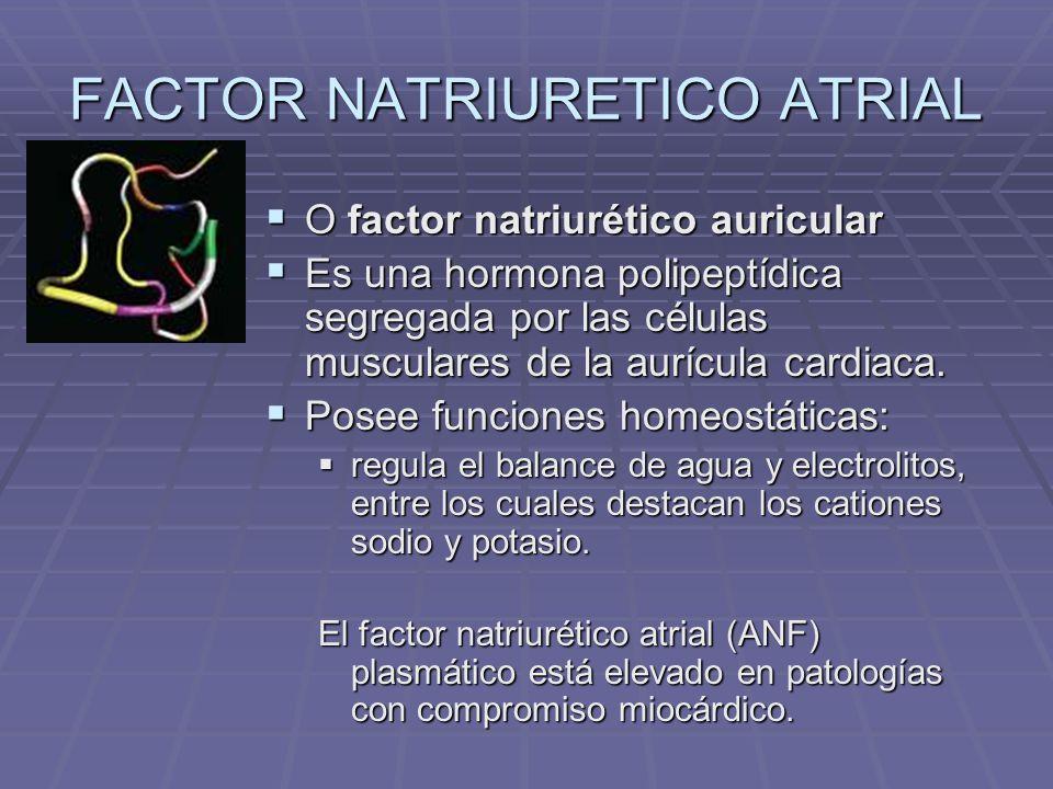 FACTOR NATRIURETICO ATRIAL La fisiología subyacente de su secreción es la siguiente: La fisiología subyacente de su secreción es la siguiente: cuando la presión sanguínea aumenta, los sensores cardíacos son excitados cuando la presión sanguínea aumenta, los sensores cardíacos son excitados lo cual induce la liberación de la hormona por parte de las células especializadas allí alojadas lo cual induce la liberación de la hormona por parte de las células especializadas allí alojadas La hormona, entonces, favorece la excreción a nivel renal de agua, sodio y potasio La hormona, entonces, favorece la excreción a nivel renal de agua, sodio y potasio lo cual reduce la volemia (esto es, el volumen total de sangre) y por consiguiente la presión sanguínea lo cual reduce la volemia (esto es, el volumen total de sangre) y por consiguiente la presión sanguínea