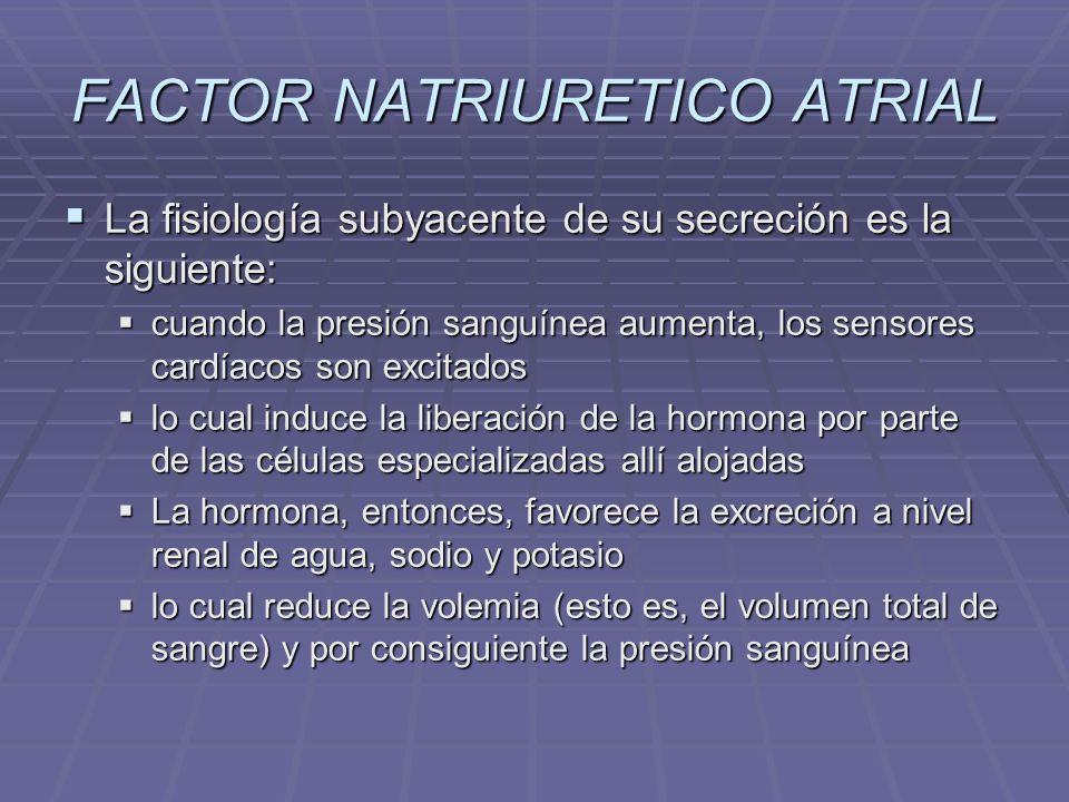 TESTICULO glándula mixta Es una glándula mixta: endocrina por la secreción de testosterona y exocrina por la secreción del esperma.