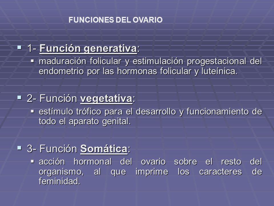 Hormonas esteroides ováricas ESTRÓGENOS: ESTRÓGENOS: Maduración de órganos sexuales internos y externos.