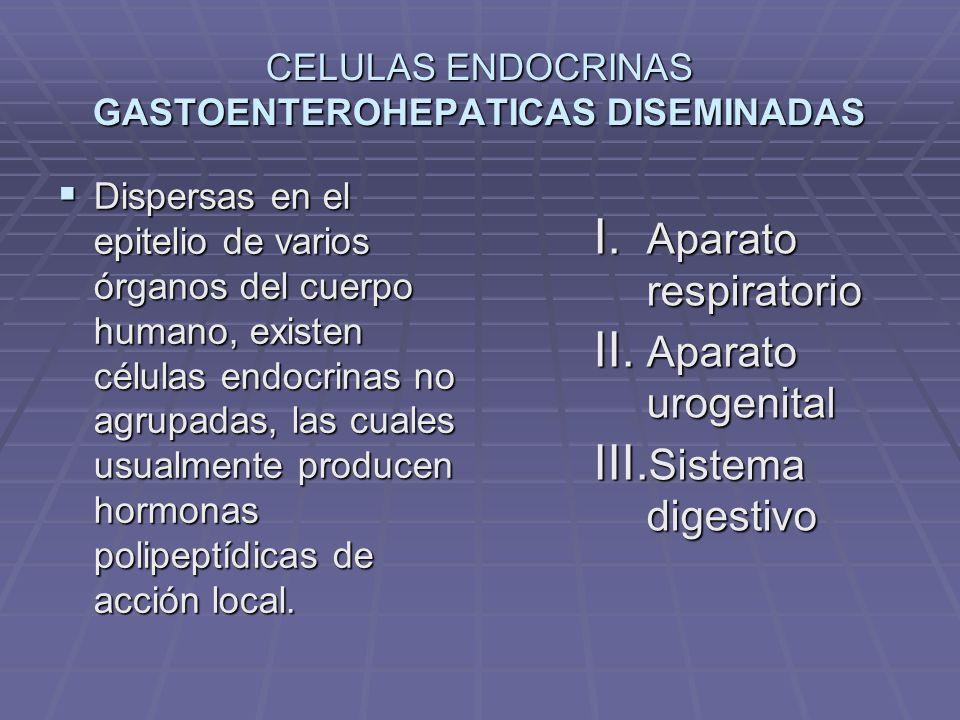 CELULAS ENTEROENDOCRINAS GEP: sistema endocrino grastroenteropancreático.