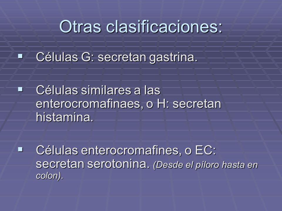 GASTRINA: SITIO DE SÍNTESIS: Células G del píloro, duodeno y yeyuno.