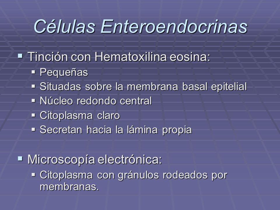 Células endocrinas Inmunohistoquímica: Inmunohistoquímica: Serotonina, somatostatina y una sustancia similar al polipéptido vasointestinal en regiones cardial, corporal y antral.