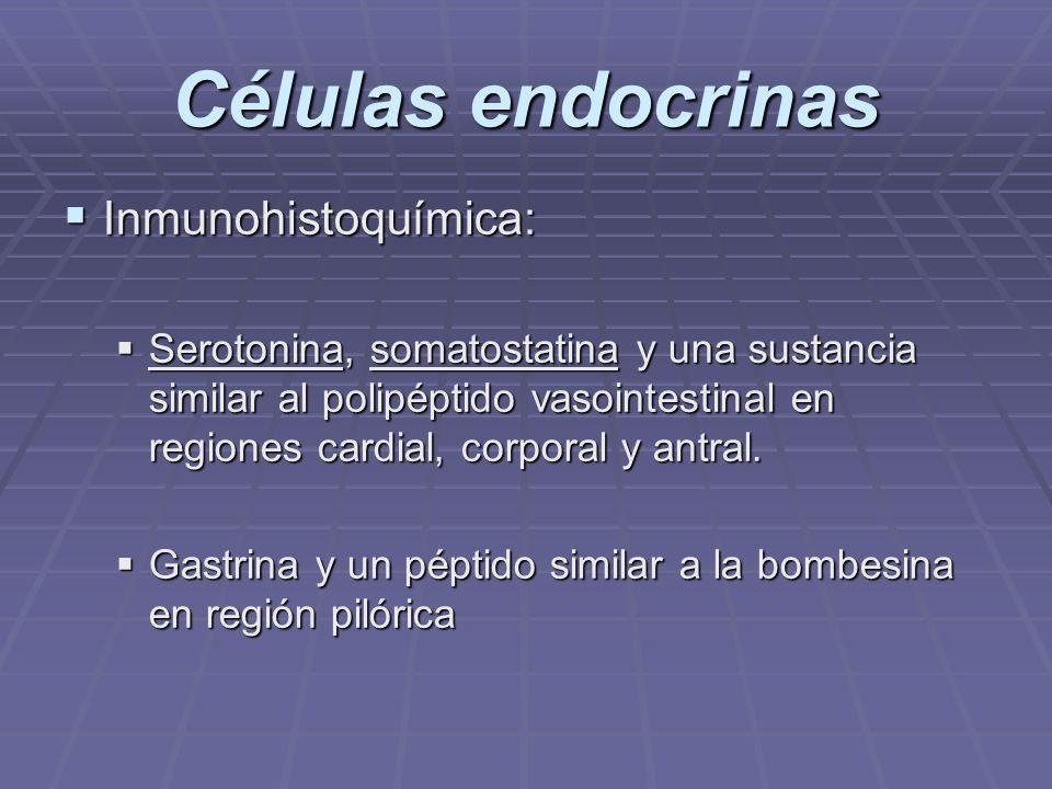 COMPONENTES PRINCIPALES DEL JUGO GÁSTRICO 1.ACIDO CLORHIDRICO (pH: 1,0 a 2,0) C.
