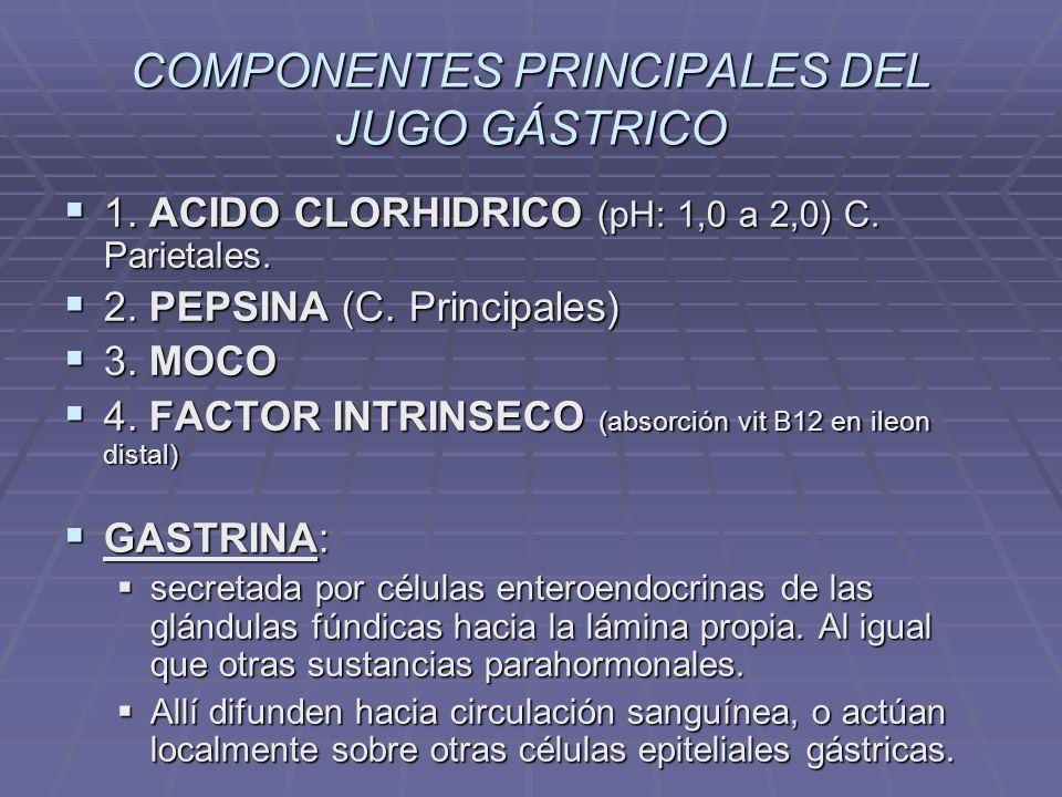 Epitelio del Intestino Delgado Células epiteliales Células epiteliales Enterocitos (absorción y digestión luminal) Enterocitos (absorción y digestión luminal) Células mucosas caliciformes (moco) Células mucosas caliciformes (moco) Células de Paneth (secreción antimicrobiana, lizosimas, defensinas, zinc) Células de Paneth (secreción antimicrobiana, lizosimas, defensinas, zinc) Células Enteroendocrinas (endocrino y paracrinas) – secretina, motilina, CCK, GIP (aumenta insulina).